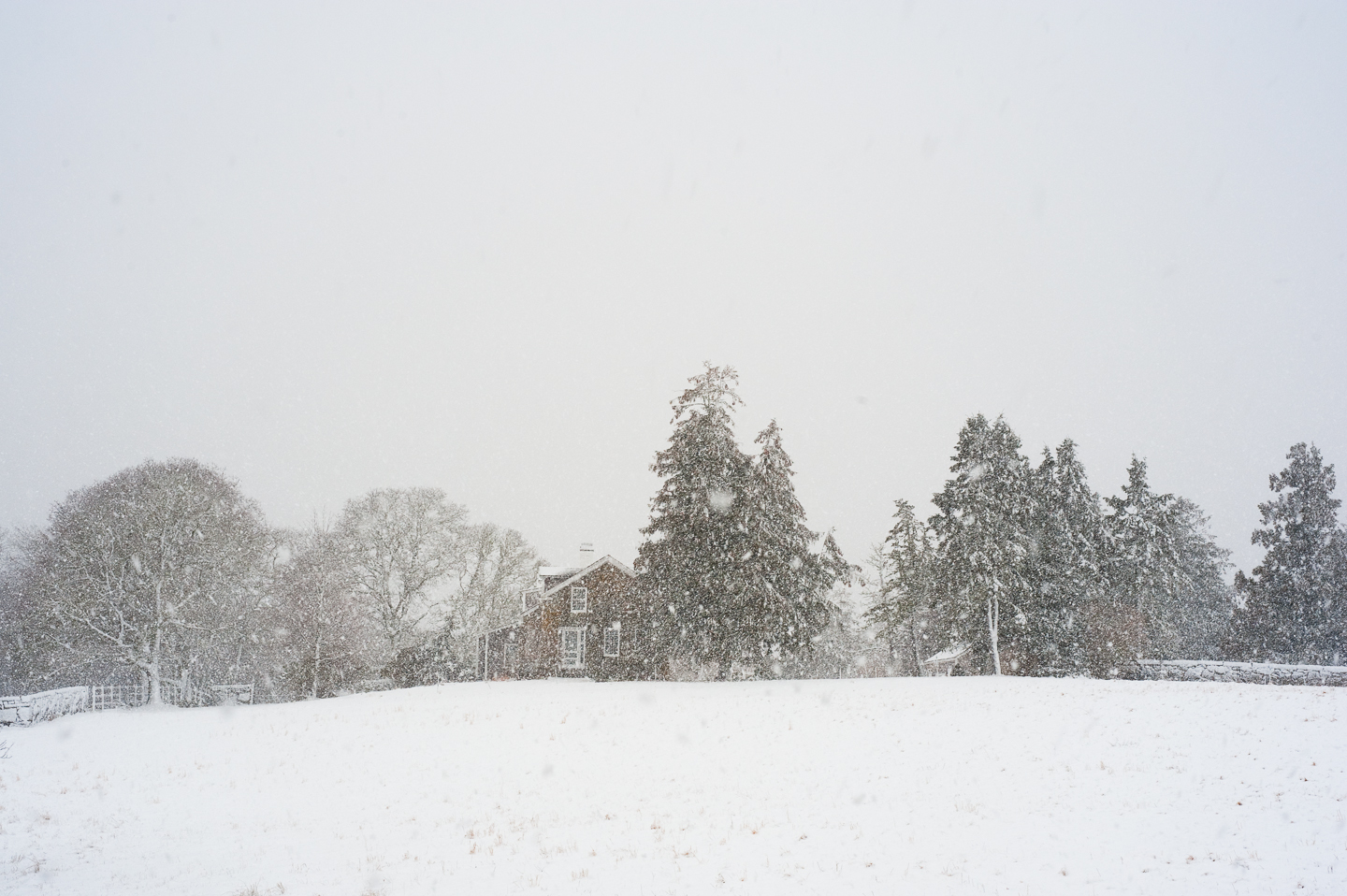 Chilmark, Winter, Snow, Alison Shaw